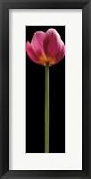 Framed Tall Purple Tulip