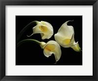 Framed Three Calla Lillies