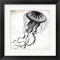 Framed Jellyfish Ink