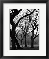 Framed Central Park Dancing Trees
