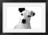 Framed Jack Russell Buddy 2