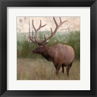Framed Elk Stride