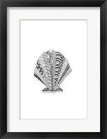 Framed BW Decorated Scallop