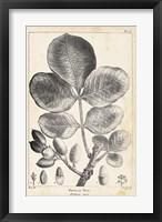 Framed Vintage Pistachio Tree