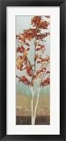 Framed Maple Tree III