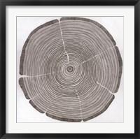 Framed Tree Lines