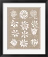 Anemone Plate II Framed Print