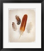 Framed Feather Group I