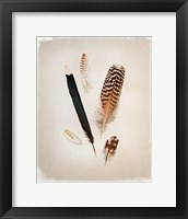 Feather Group II Framed Print