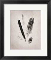 Framed Feather Group II BW