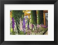 Framed Longwood Gardens - Delphinium, Pennsylvania