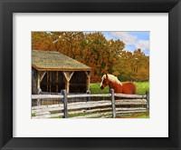 Framed Old Horse Shed, Mumford Ny