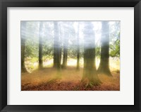 Framed Blurred Trees