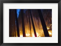 Framed Burning Forest