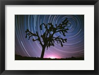 Framed Joshua Tree North Star