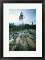 Framed Lonefir