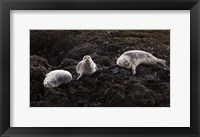 Framed Lounging Seals