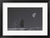Framed Moon Trees Hill