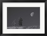 Framed Moon Trees Hill