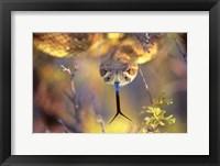 Framed Rattle