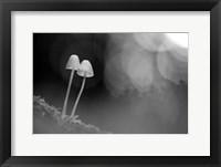 Framed Mushroom Tiny