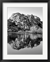 Framed Joshua Tree Lake BW