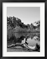 Framed Joshua Tree Lake with Log BW