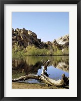 Framed Joshua Tree Lake with Log