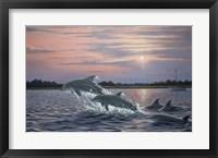 Framed Dolphins