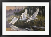 Framed Morning Departure Egrets