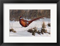 Framed Winter Walk Pheasant