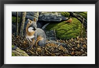 Framed Grey Fox