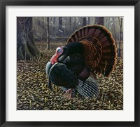 Framed King Of Spring - Wild Turkey
