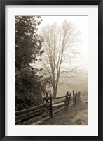 Early Morning II Framed Print
