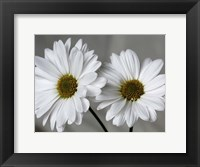Framed Don't Eat Daisies II