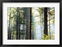 Framed Shrouded Forest II