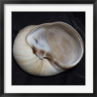 Moonsnail I Framed Print