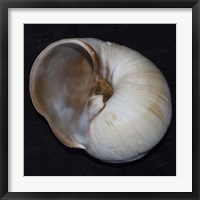 Moonsnail III Framed Print