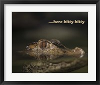 Framed Here Kitty Gator