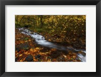 Framed Creekside Colors