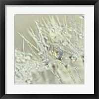 Framed Dandelion Dew III