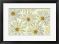 Framed Daisy Flowers