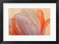 Framed Orange Glowing Tulip