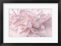 Framed Pink Peony Petals II