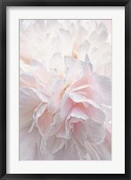 Framed Pink Peony Petals IV