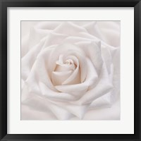 Framed Soft White Rose