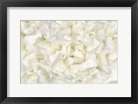 Framed White Peony Flower