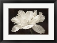 Framed White Tulip I