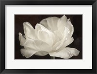 Framed White Tulip III