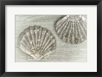 Framed Two King Scallop Shells